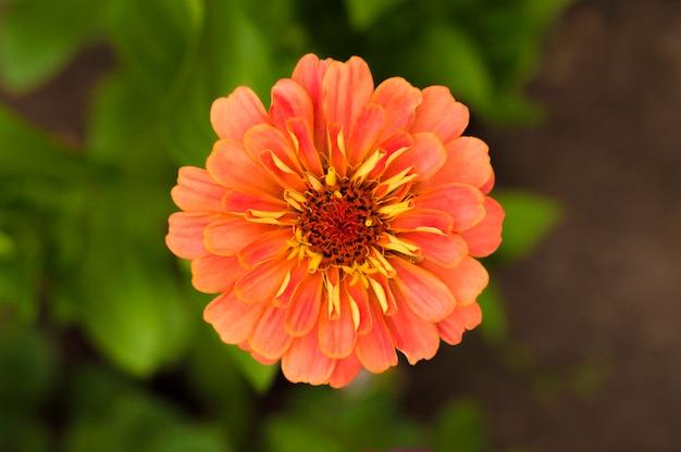 Flor cenoura cor contra o chão