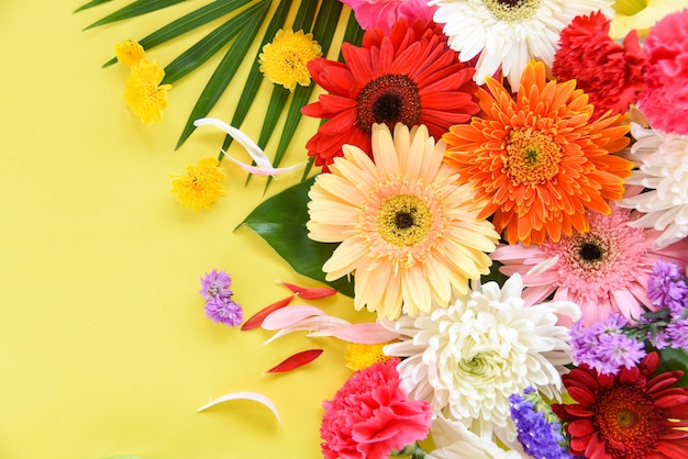 Flor colorida de primavera tropical planta gerbera crisântemo
