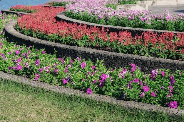 Flor colorida no jardim.