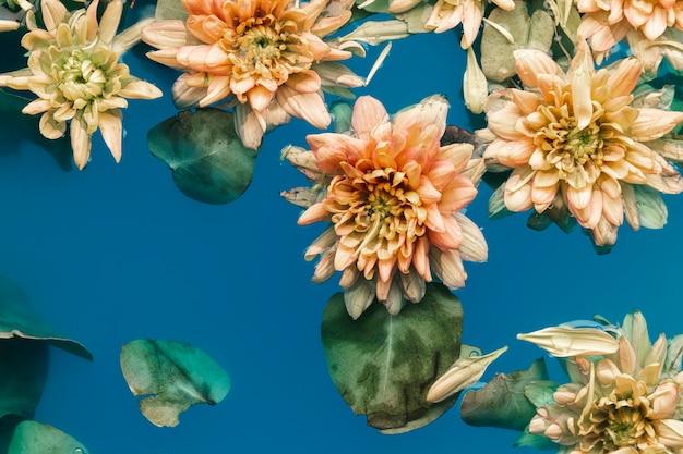 Flor, com, folhas, em, água