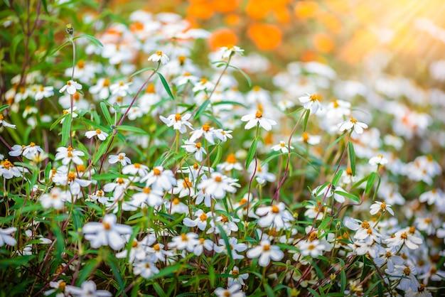 Flor com um pequeno bug. a flor chamada sphagneticola trilobata