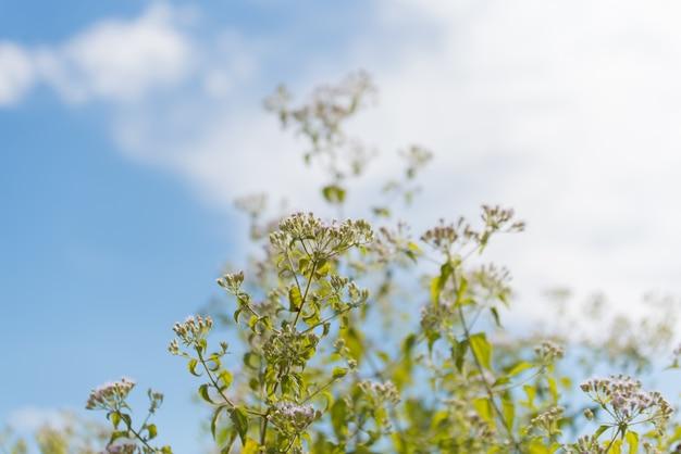 Flor contra o céu azul