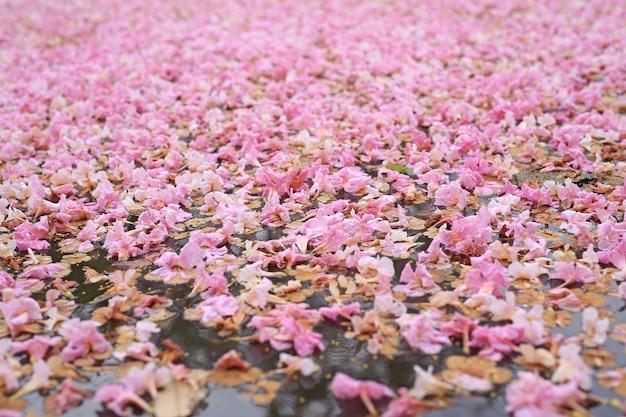 Flor cor-de-rosa da queda inteiramente na superfície da água ao ar livre.