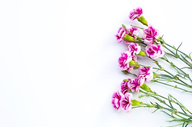 Flor cravo em fundo branco. copie o espaço
