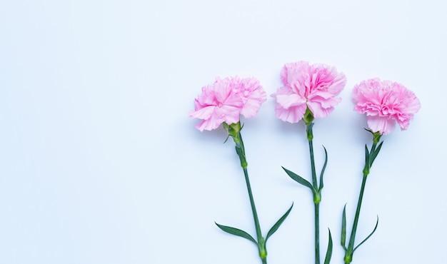 Flor cravo em fundo branco. vista do topo