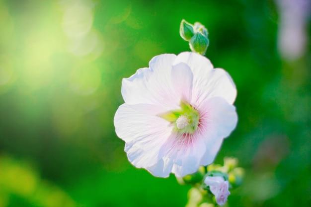 Flor crescendo no jardim com sol e bokeh