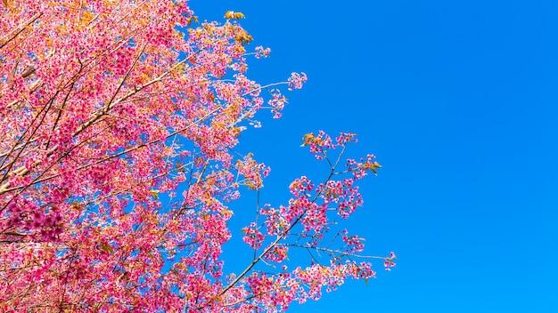 Flor da flor-de-rosa bonita