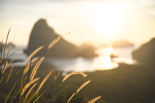 Flor da grama na luz amarela morna do sol, wildflowers marrons, o fundo natural.