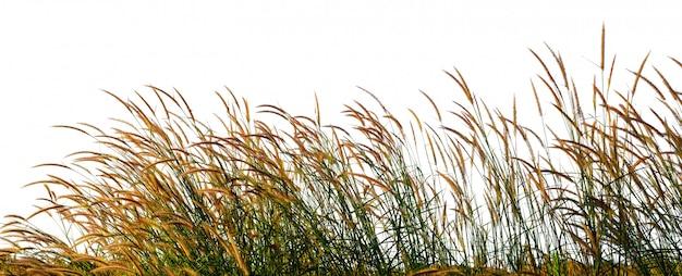 Flor da grama selvagem