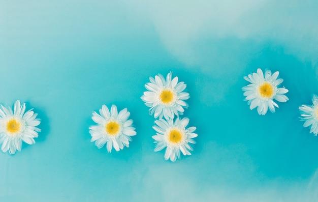 Flor da margarida branca flutua na água. o conceito de verão, mar e flores