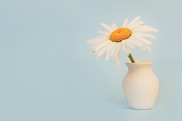 Flor da margarida em um jarro branco em um fundo azul com um close-up do espaço de cópia