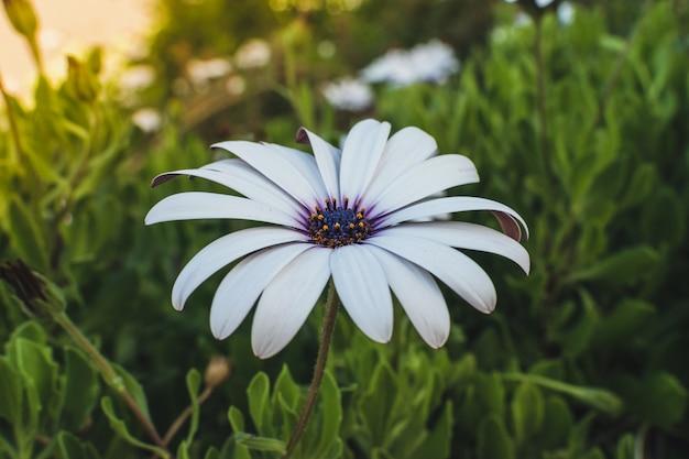 Flor da margarida gerbera. conceito de festa de verão mulheres ao ar livre