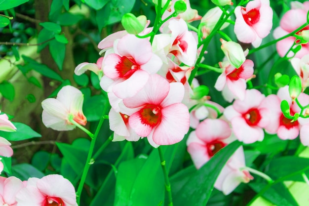 Flor da natureza