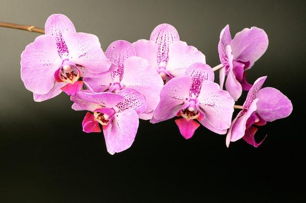 Flor da orquídea em fundo preto. modelo de fundo floral