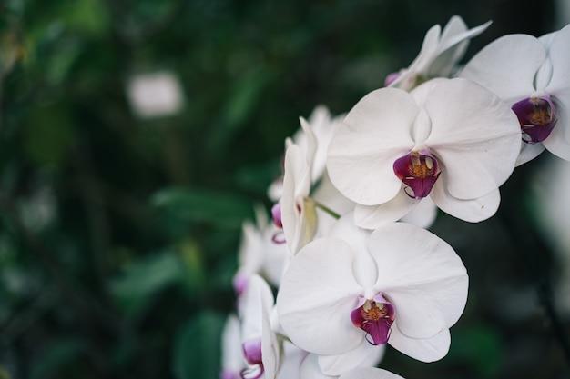 Flor da orquídea no jardim de orquídeas no inverno ou dia de primavera com folhas verdes e grama