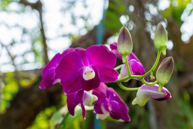 Flor da orquídea no jardim no dia do inverno ou de mola.