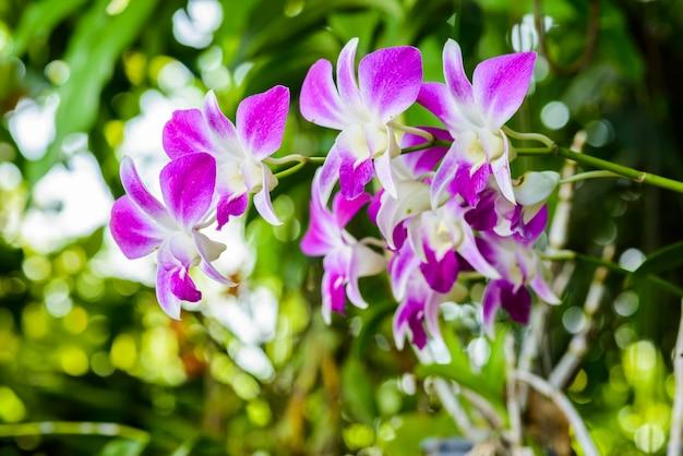 Flor da orquídea no jardim tropical.