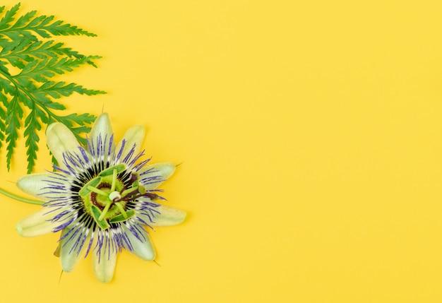 Flor da paixão com folha de samambaia em uma mesa amarela