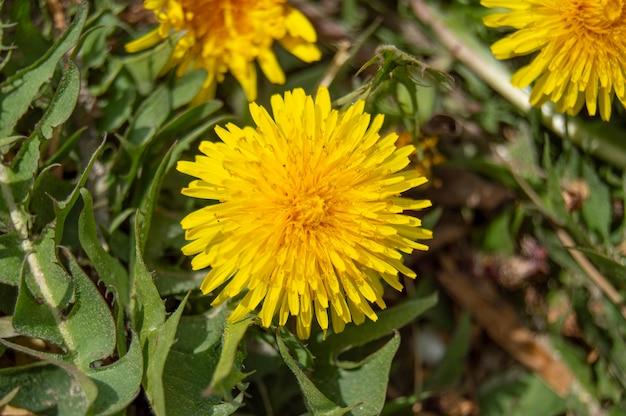 Flor da primavera folha amarela verde