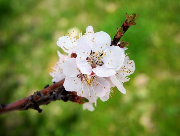 Flor da primavera.