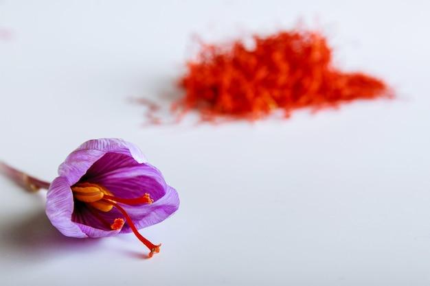 Flor de açafrão fresco em um fundo de açafrão seco em uma mesa branca.