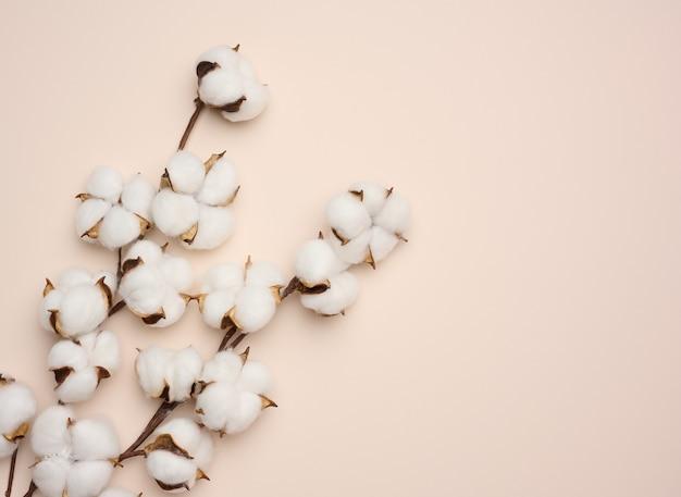 Flor de algodão branco sobre fundo de papel bege pastel, sobrecarga. composição plana do minimalismo, cópia espaço