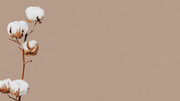 Flor de algodão e espaço de design