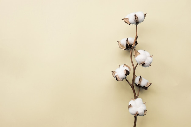 Flor de algodão em fundo de papel amarelo pálido pastel
