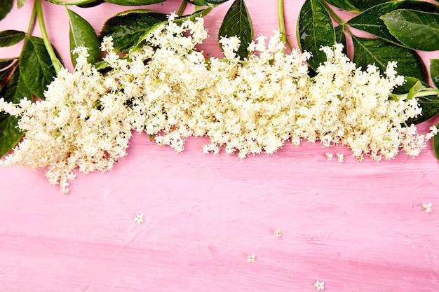 Flor de ancião em fundo rosa