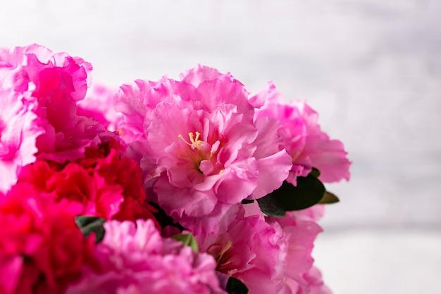 Flor de azaléia em fundo claro