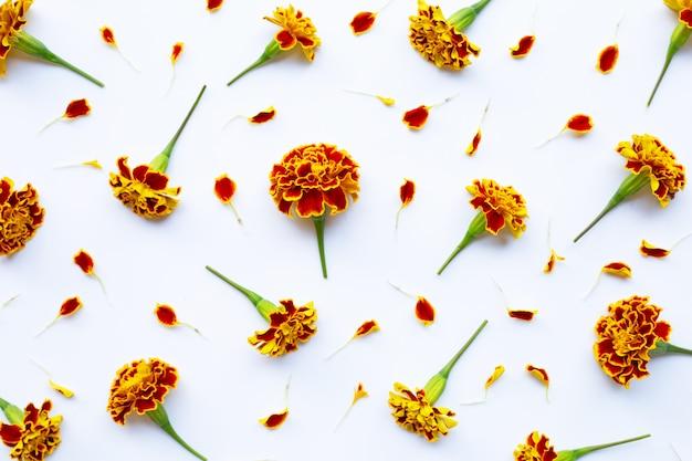 Flor de calêndula amarela vermelha linda