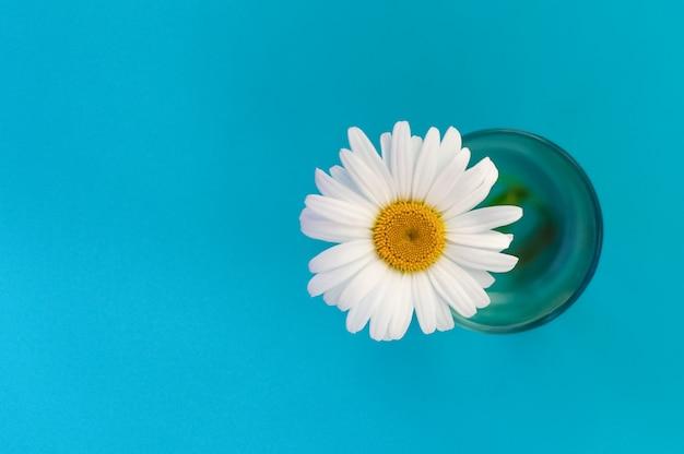 Flor de camomila grande em um copo no lado direito da imagem, vista superior sobre um fundo azul