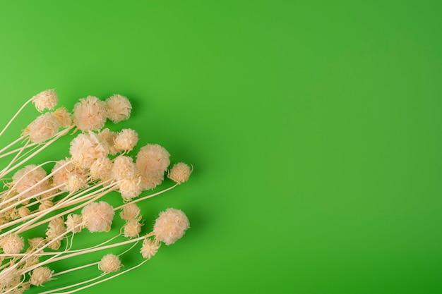 Flor de campo seco isolada em fundo verde com sombra real feche com espaço para texto