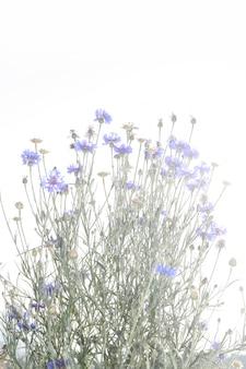 Flor de capim roxo