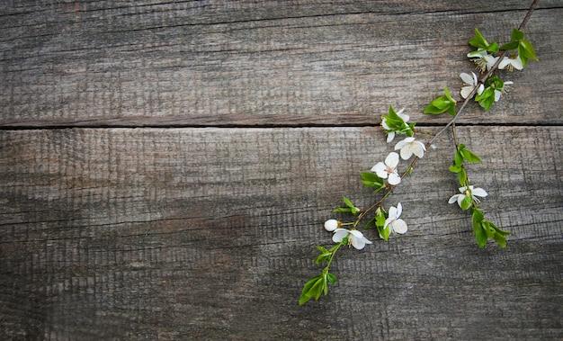 Flor de cerejas de primavera
