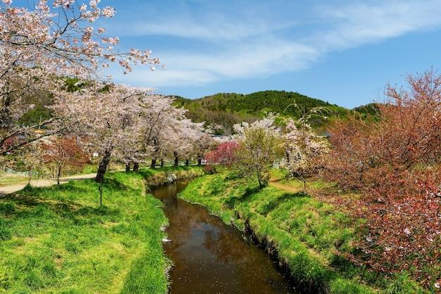 Flor de cerejeira ao redor do canal e ponte na vila de oshino hakkai