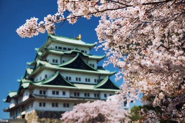 Flor de cerejeira branca com o castelo de nagoya