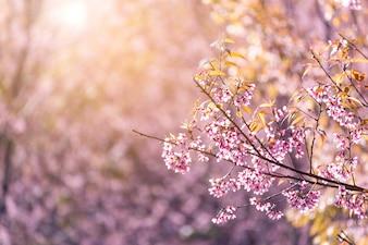 Flor de cerejeira close-up com fundo de céu azul Flor de cerejeira close-up durante o inverno