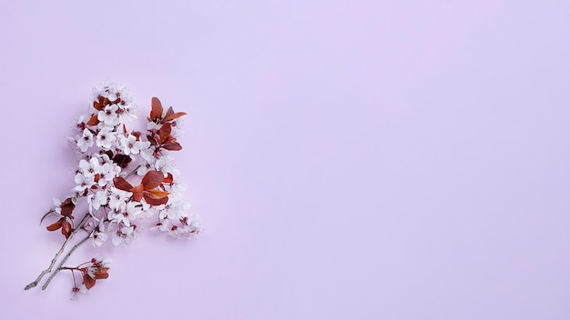 Flor de cerejeira em banner da web com fundo lilás