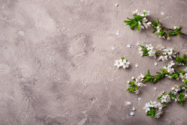 Flor de cerejeira em fundo bege