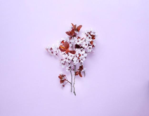 Flor de cerejeira em fundo lilás