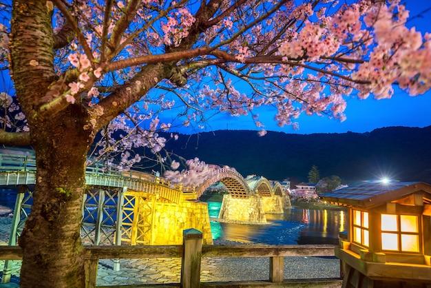 Flor de cerejeira em plena floração na ponte kintaikyo, japão