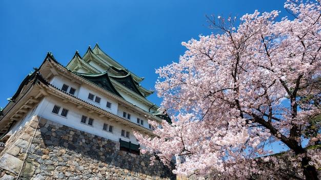 Flor de cerejeira ou sakura no castelo de nagoya