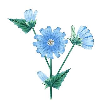 Flor de chicória em aquarela azul