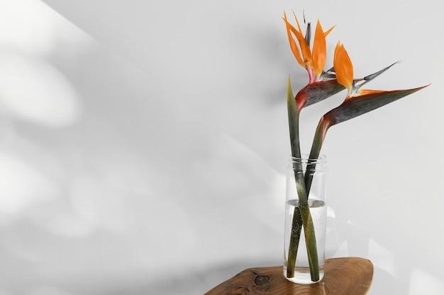 Flor de conceito mínimo abstrato com sombras em um vaso
