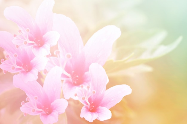 Flor de cor doce e pastel, foto de foco suave e embaçada no estilo vintage
