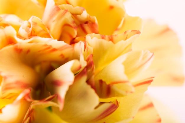 Flor de cravo amarelo