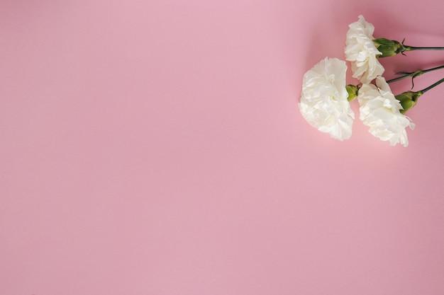 Flor de cravo branco em fundo rosa pastel. copie o espaço. postura plana. vista superior do conceito de natureza