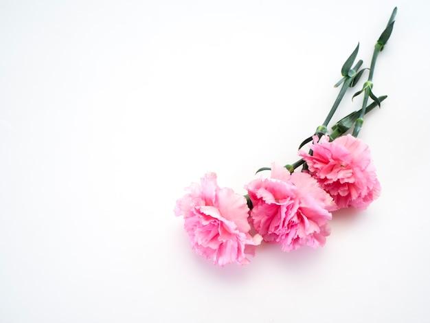 Flor de cravos rosa para o dia das mães