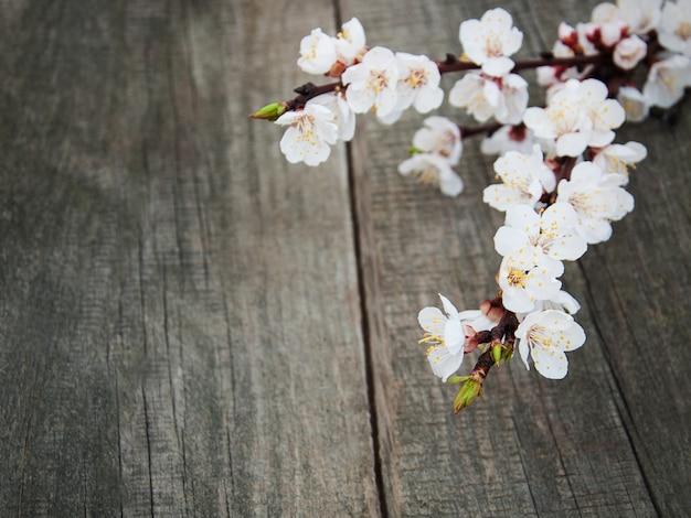 Flor de damasco de primavera